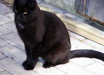 cat found on Île-Bizard