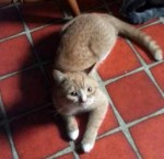 cat found Montreal-North