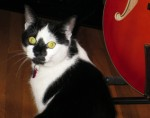 cat lost in LaSalle bw