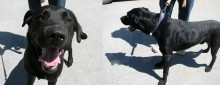 dog found at Lac Megantic