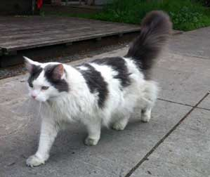 cat found in the Mile End