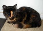 cat found in St-Ambroise-de-Kildare