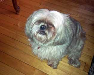 dog found in St-Léonard