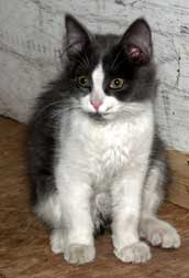 kitten found in Baie-d'Urfé
