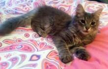 kitten found in C.D.N.