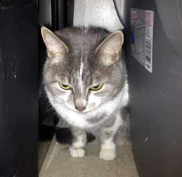 cat found in Beaconsfield