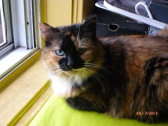 cat found in La-Petite-Patrie