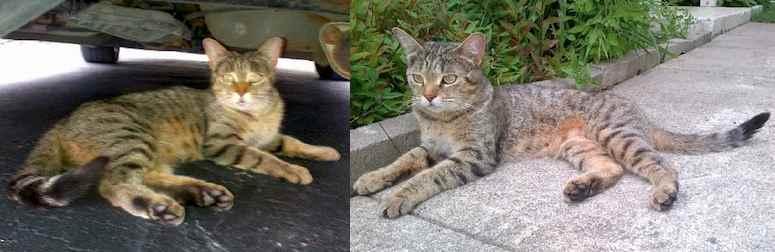 cat found in R.DP.