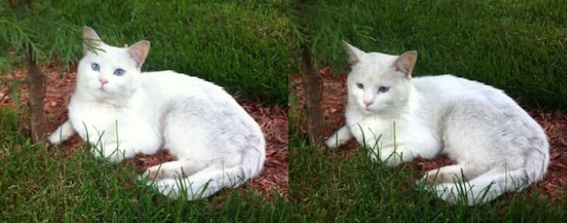 white cat found in Verdun