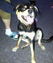 dog found in St-Luc