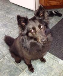 dog found in St Mathias sur Richelieu