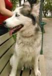 dog lost in Alma