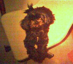 dog lost in Little Burgundy