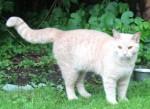kitten found in Dewittville