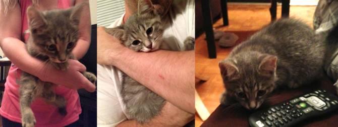kitten found in Greenfield Park