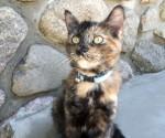 kitten found in Montreal North