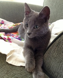 kitten found in N.D.G.