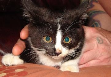 kitten found in Pointe-aux-Trembles
