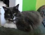 cat found in Hochelaga-Maisonneuve