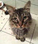 cat found Pointe des Cascades