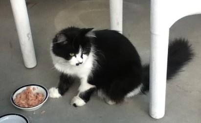 cat found Tetreaultville