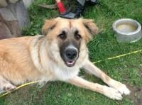 dog found in Ste Dorothee x