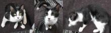 kitten found in Downtown