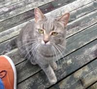 cat found in Beloeil