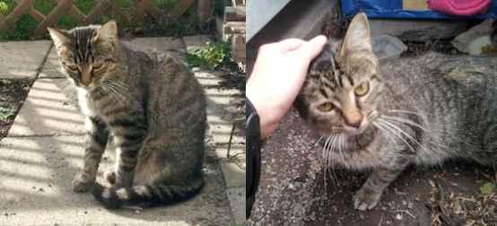 cat found Laval