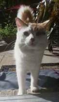 cat found in Lorraine