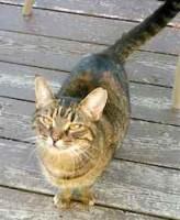 cat found in Ste-Adele