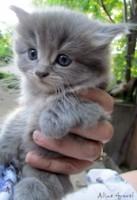 kitten lost in Mirabel