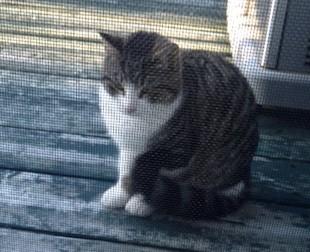 cat found in St-Canut
