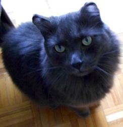 cat lost in Le Gardeur