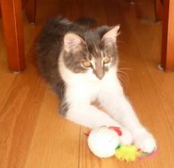 cat lost in Lorraine