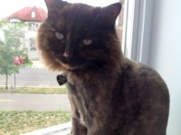 cat lost in Terrebonne
