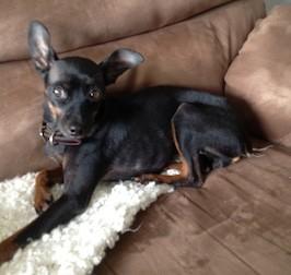dog found in Ahuntsic