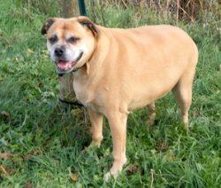 dog found in St-Jean-de-Baptiste