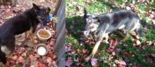 dog found in Victoriaville