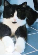 cat found in Brossard