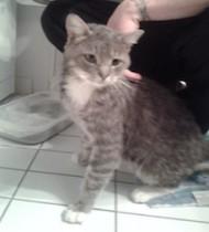 cat found St Jean sur Richelieu
