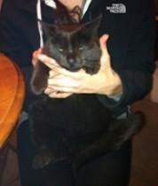 cat found Ste Adèle