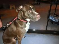 dog found LaSalle pit