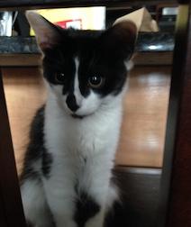 kitten found iin Ville-Émard