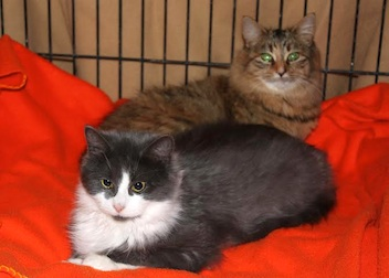 2 cats found in Laval