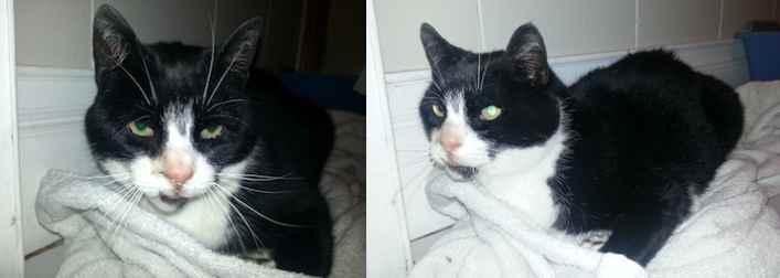 cat found in Ville Émard