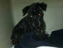 dog found on Nun's Island