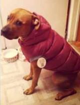 dog lost in St Leonard