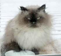 cat found Brossard