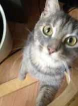 cat found in St Henri